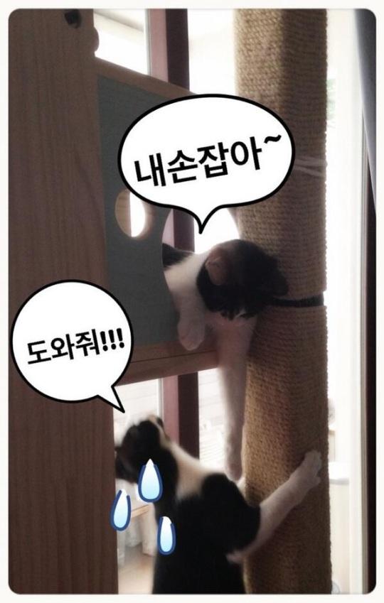 dara's cats